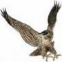 Avatar di falco